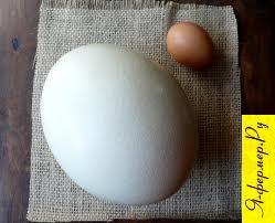 Самая полная информация о страусиных яйцах