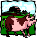 свинья, свиноводство, свиноферма, картинка