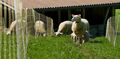 Пластиковое ограждение (сетка) для овец