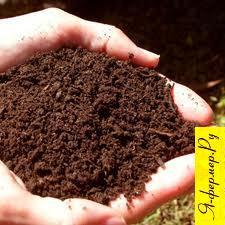 Обработка почвы в занятых парах