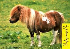 Разведение пони