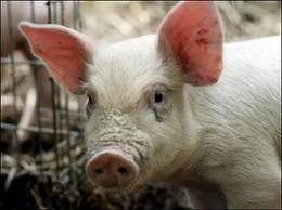 Клиническое исследование сельскохозяйственных животных