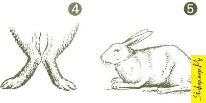 Кролики с согнутыми лапами и угловатой спиной.