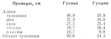 Промеры холмогорских гусей