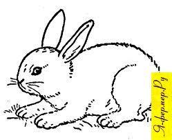 Болезни кроликов: признаки, течение, лечение и меры профилактики
