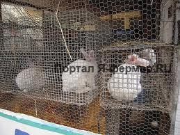 Потребность кроликов в питьевой воде