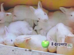 Крольчиха съедает или загрызает своих крольчат: как этого не допустить