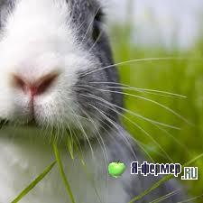 Инфекционные болезни кроликов