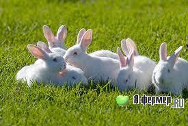 Выбор породы кроликов — дело серьезное