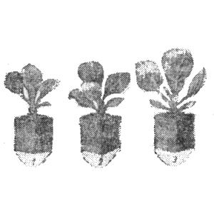 Рассада, рассадные горшочки, выращивание рассады