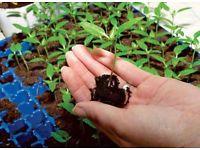 Выращиваем здоровую рассаду.