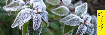 Сад и мороз.