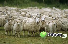 Новые технологии содержания овец