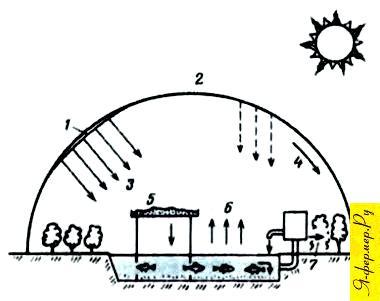 Пруд-теплица. Схема теплицы-пруда для разведения рыбы.