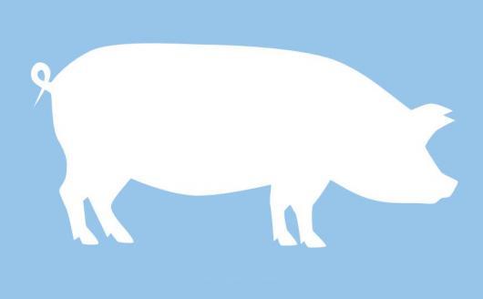 Африканская чума свиней! Памятка населению!