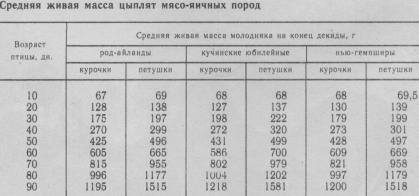 средняя живая масса цыплят мясо-яичных пород, таблица