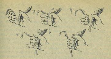 Техника доения коров кулаком