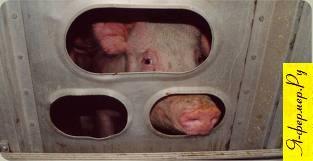 Ветеринарно-санитарные правила убоя скота. Каких сельскохозяйственных животных запрещается убивать на мясо.
