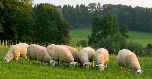 Уход за пастбищами для овец