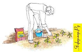 Как вносить удобрения в почву