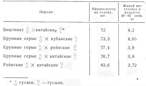 Таблица вариантов скрещивания разных пород гусей, разработанные ВНИТИП (Б. В. Пименов)