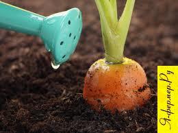 Выгонка овощей  дома в холодное время года технология, советы, рекомендации