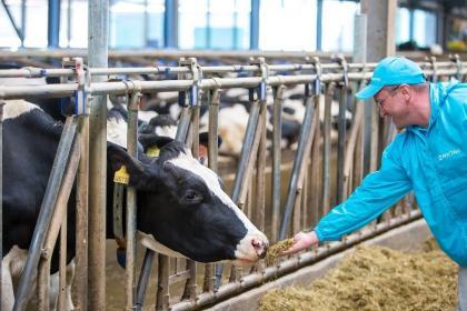 Витаминный премикс для коров: что это такое и зачем его использовать