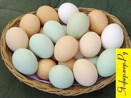 двойной желток у яиц, желток у яиц, курица, скорлупа у яиц, сорта яиц, цвет яиц