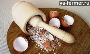 10 поводов не выбрасывать яичную скорлупу или чем полезна яичная скорлупа. Яичная скорлупа.