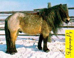 Тяжелоупряжные лошади