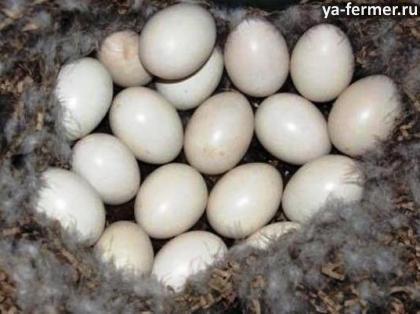Остыли яйца за 2 часа, их можно выбросить?