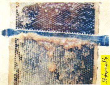 Забрус — это срезанные полоской верхние крышечки запечатанных медовых сотов
