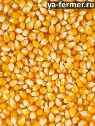 Ищу поставщика кукурузы зерно (фураж).