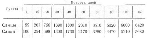 Таблица живой вес гусят холмогорской породы, в граммах
