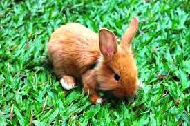 Почему кролик кусается. Что делать, если кролики кусаются.