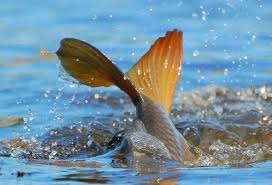 нерест рыбы, когда нерестится рыба