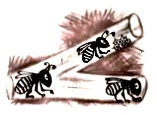 Как пчёлы обнаруживают источник запаха