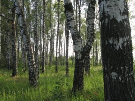 Лес, фото