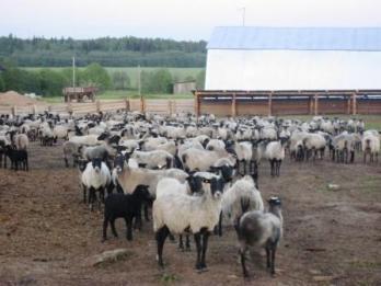 Фермерство: почему для России не подходят рецепты Запада?