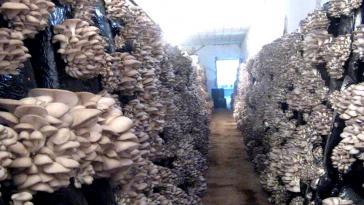 Ферма грибов
