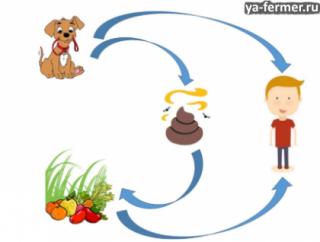 Эхинококкоз описание болезни у человека и животных