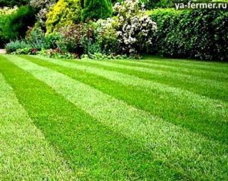 Газонная трава: какую выбрать и как ухаживать?