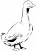 гуси, разведение гусей, картинка