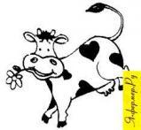 Определяем продуктивность коровы