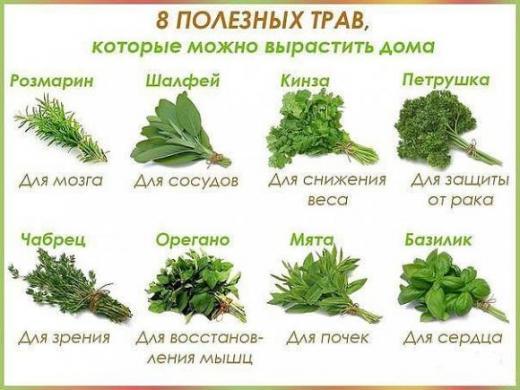 Восемь полезных трав, которые можно вырастить даже дома.