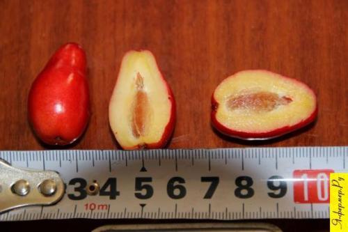 Размеры плодов кизила.