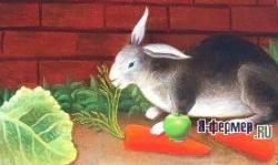 Сочные корма для кроликов