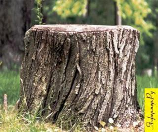 Удаление пней на участке. Как избавиться от деревьев и пней на участке.