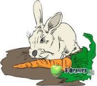 Кормление кроликов различных групп