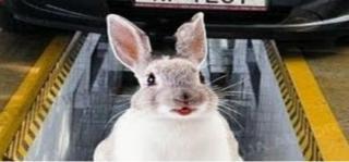 Разведение кроликов в ямах. Содержание кроликов в ямах.